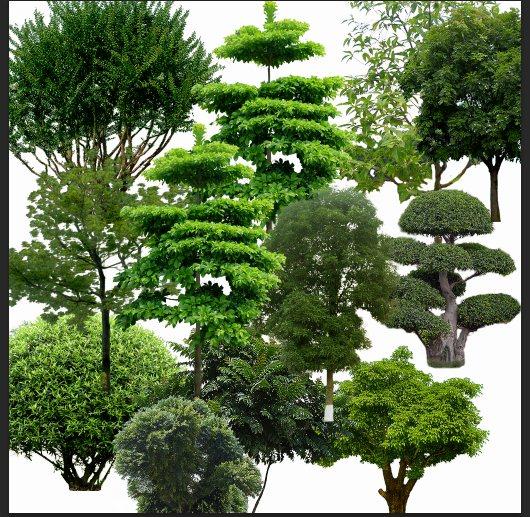 绿色树木植物素材psd格式[原创]