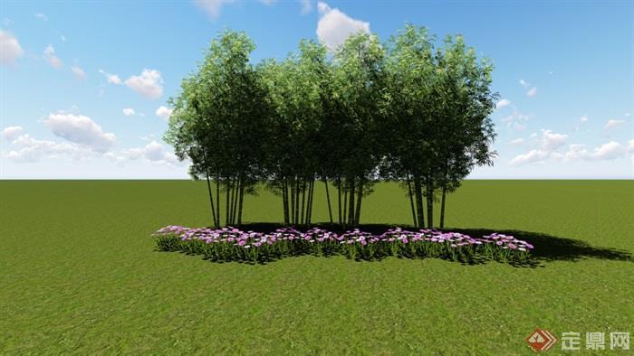 竹子素材,竹子植物竹子