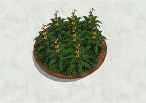 盘状植物盆栽SU(草图大师)模型