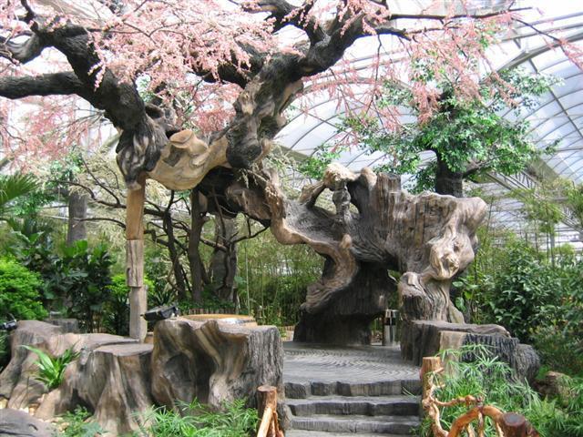 造型树,造型树桩