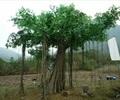 造型樹,造型樹樁