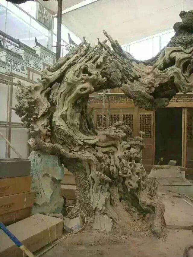 树木,树木枯树
