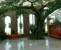 树木素材,树木
