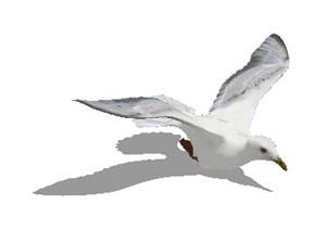 海鸥素材设计SU(草图大师)模型