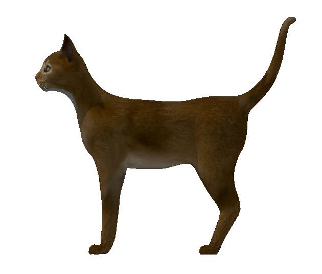 动物小猫设计su模型