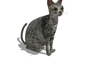 小猫详细完整设计SU(草图大师)模型