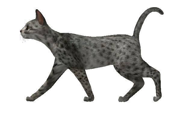 可爱小猫动物素材su模型[原创]