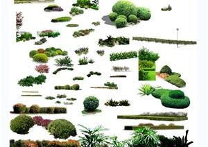 某植物素材设计psd素材