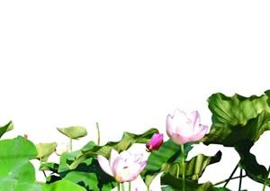 荷花及花坛PSD设计素材
