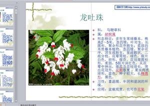 常见植物花卉400余种