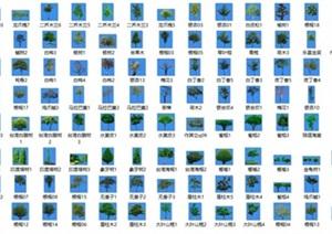 常用园林景观效果图植物素材贴图乔木灌木草本PSD格式