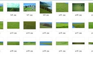 大量乔木、灌木、草本、藤本后期素材psd、jpg格式