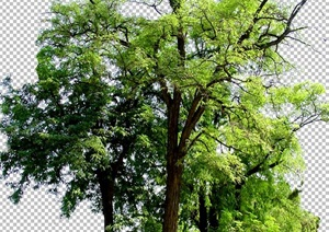 某详细多种乔木植物psd素材