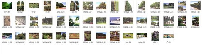 多种不同的详细植物jpg、psd图