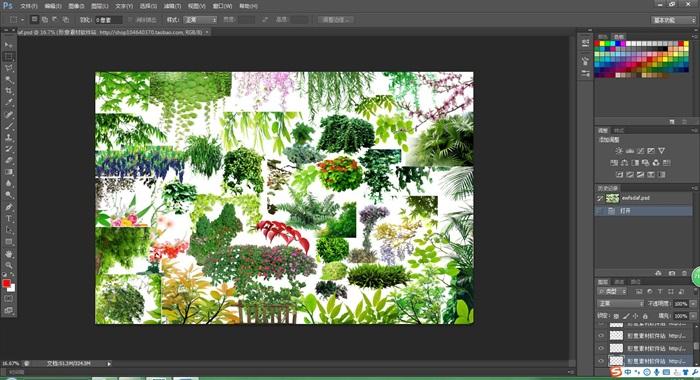某详细的植物素材psd图层