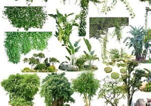 园林景观植物ps效果图素材