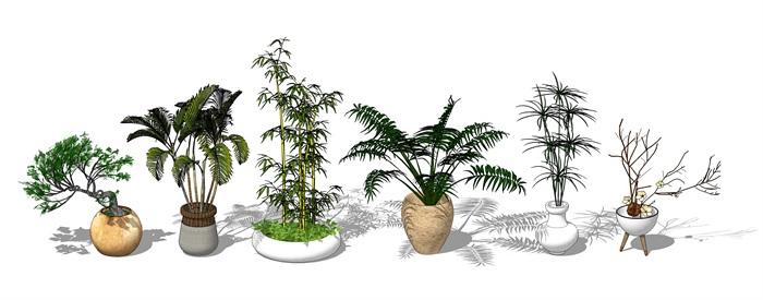 植物合集(3)