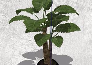 六款室内外绿化盆栽植物SU(草图大师)模型