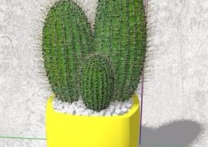 芦荟、仙人掌、喇叭花植物盆栽SU(草图大师)模型