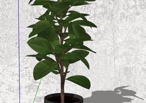 6盆精美绿化植物盆栽素材SU(草图大师)模型