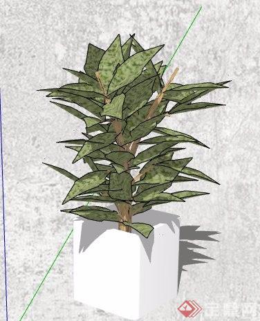 4款室内摆件盆栽植物su模型