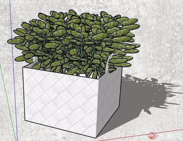 4款小型花盆盆栽植物su模型