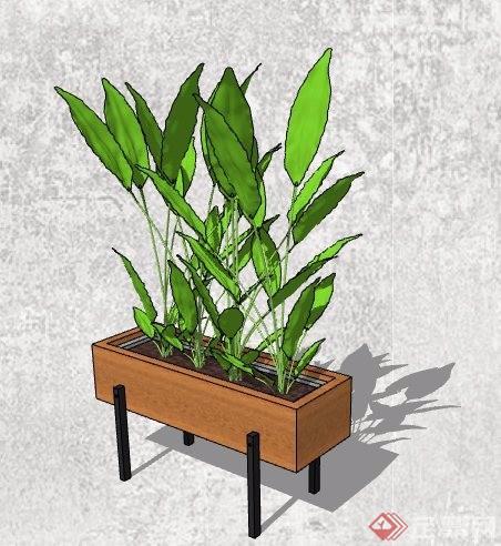 4款盆栽植物及植物架su模型