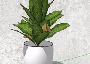 四款盆栽植物及花架SU(草图大师)模型