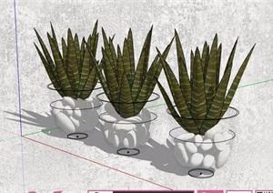 迎客松、散尾葵盆栽植物素材SU(草图大师)模型
