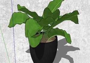 美人蕉等盆栽植物组合素材SU(草图大师)模型