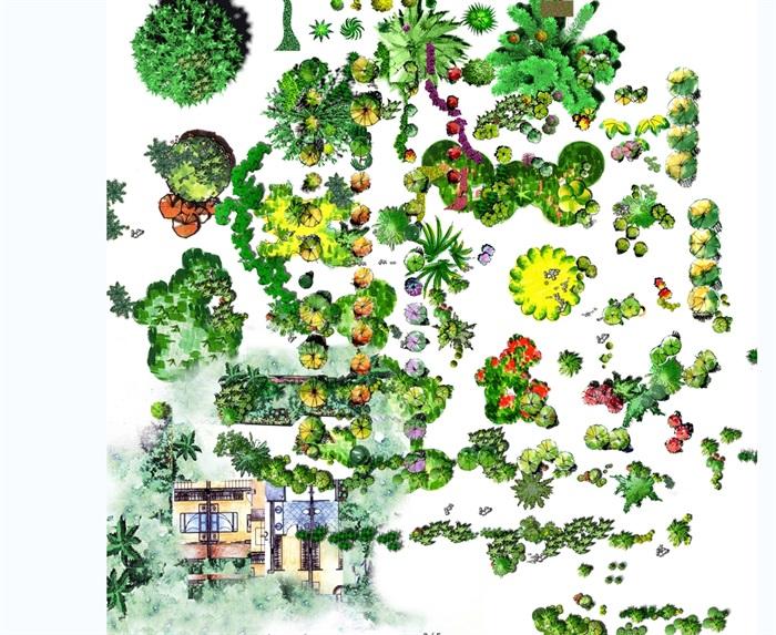 植物手绘平面立面景观psd素材(2)