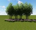 竹子素材,竹子植物