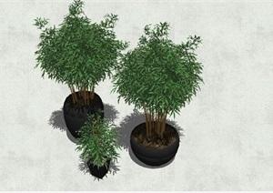 精细景观树SU(草图大师)模型