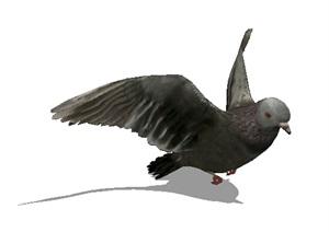 详细鸽子素材设计SU(草图大师)模型