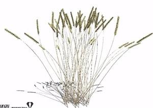 麦子麦穗SU(草图大师)模型