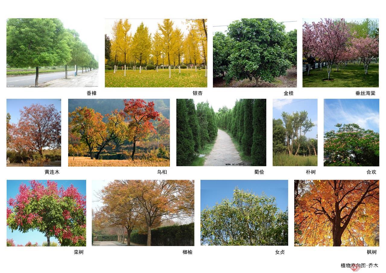 42 植物意向图-乔木