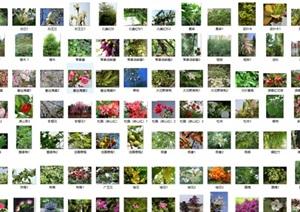 常见园林绿化植物照片集合